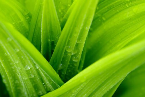 Environmental Conservation「Leaves drop」:スマホ壁紙(1)