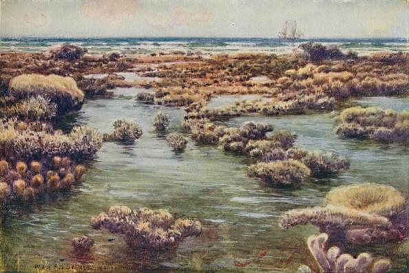 Coral - Cnidarian「The Great Barrier Reef」:写真・画像(12)[壁紙.com]