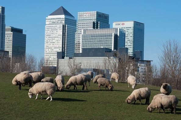 Grass Family「Docklands And Canary Wharf」:写真・画像(10)[壁紙.com]