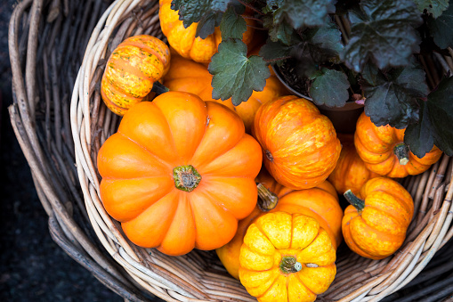 Jack-o'-lantern「Large selection of halloween pumpkins on display at Borough Market, London, UK」:スマホ壁紙(5)