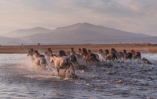 Mustang - Wild Horse「Wild Horses running in water」:スマホ壁紙(15)