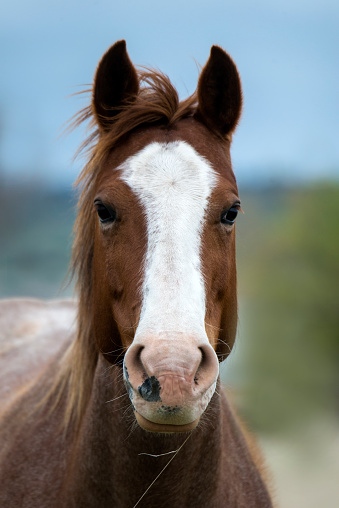 Animal Head「Wild horses」:スマホ壁紙(7)