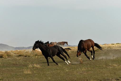Battle「Wild Horses」:スマホ壁紙(19)