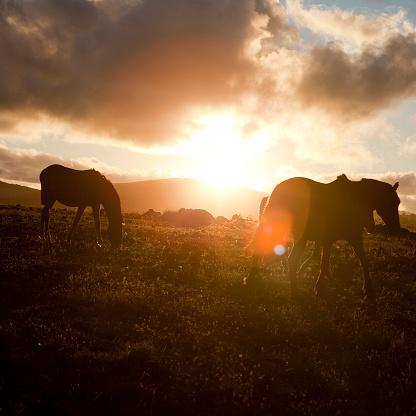 Horse「Wild horses」:スマホ壁紙(4)