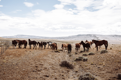 Pampas「wild horses walking in patagonia」:スマホ壁紙(7)