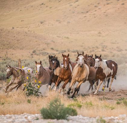 Horse「Wild horses running on ranch.」:スマホ壁紙(5)
