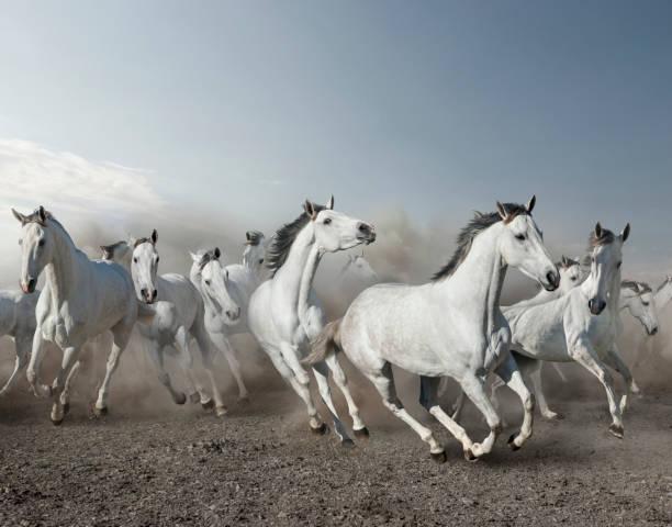 Wild horses stampeding in desert:スマホ壁紙(壁紙.com)