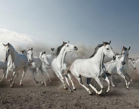 Horse「Wild horses stampeding in desert」:スマホ壁紙(13)