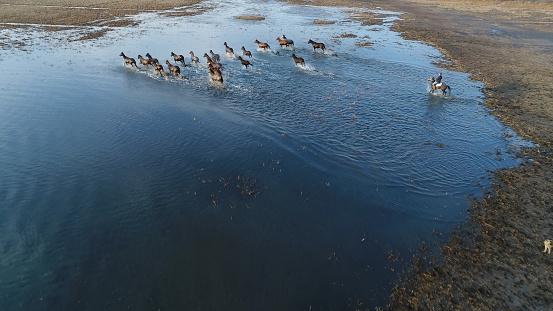 Stallion「Wild Horses of Anatolia aerial view photography」:スマホ壁紙(18)