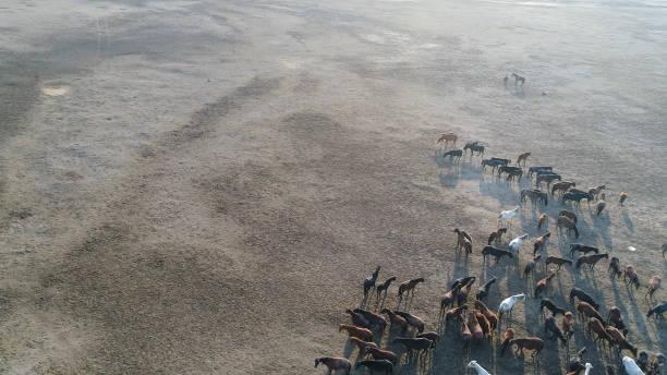 Wild Horses of Anatolia aerial view photography:スマホ壁紙(壁紙.com)