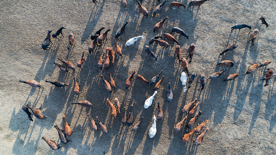 Horse「Wild Horses of Anatolia aerial view photography」:スマホ壁紙(3)