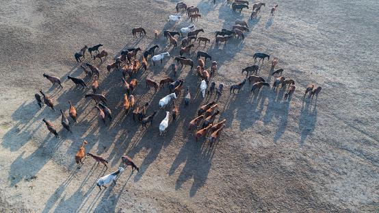Shallow「Wild Horses of Anatolia aerial view photography」:スマホ壁紙(17)