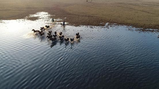 Stallion「Wild Horses of Anatolia aerial view photography」:スマホ壁紙(15)