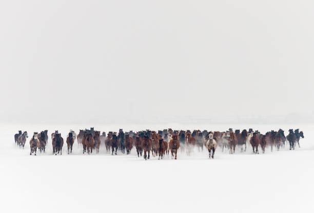 Wild horses running in snow:スマホ壁紙(壁紙.com)