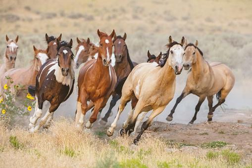 野生動物「アメリカ合衆国ユタを実行している野生の馬」:スマホ壁紙(17)