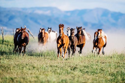 Horse「Wild horses running in Utah, USA in summertime」:スマホ壁紙(3)