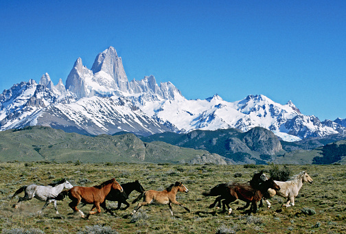 Horse「Wild Horses in Valley」:スマホ壁紙(0)
