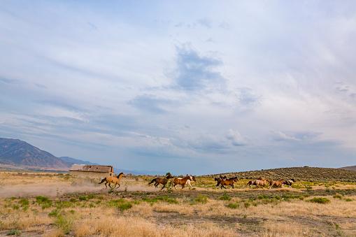 Horse「Wild Horses Running Across a Field」:スマホ壁紙(3)