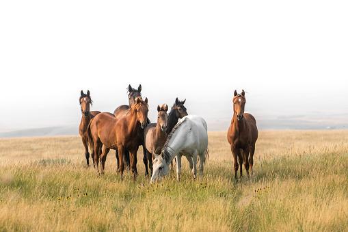 Animal Wildlife「Wild horses congregate on hillside above badlands」:スマホ壁紙(5)