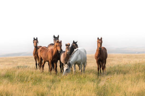 Wild horses congregate on hillside above badlands:スマホ壁紙(壁紙.com)