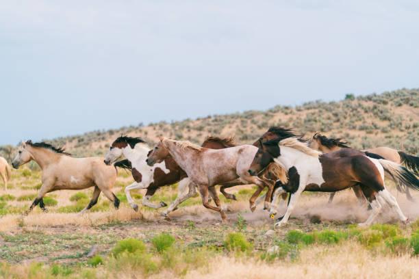 Wild horses running:スマホ壁紙(壁紙.com)