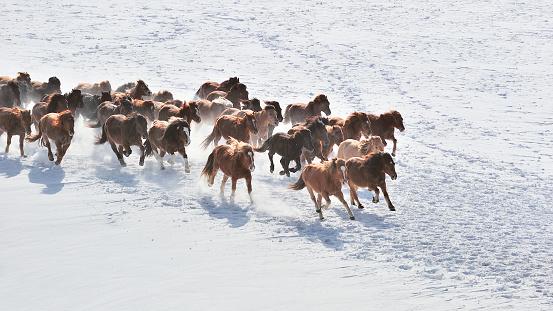 Animal Wildlife「Wild Horses Running」:スマホ壁紙(7)