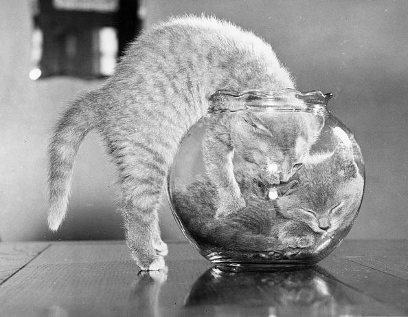 Kitten「Full Up Inside」:写真・画像(7)[壁紙.com]