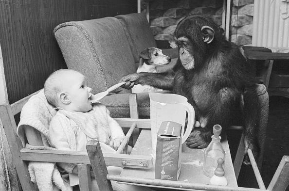 Affectionate「Monkey Meals」:写真・画像(16)[壁紙.com]