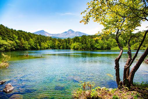 月「日本マウント磐梯湖と春のツリー」:スマホ壁紙(16)