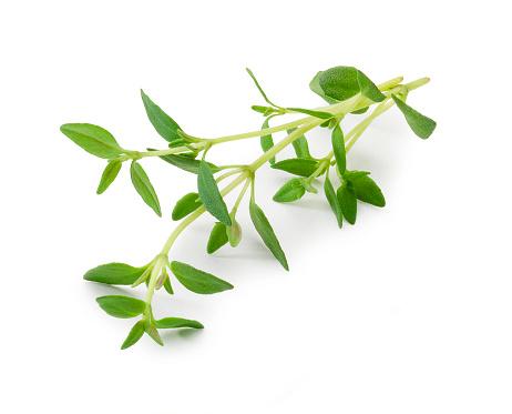 Branch - Plant Part「Thyme」:スマホ壁紙(0)