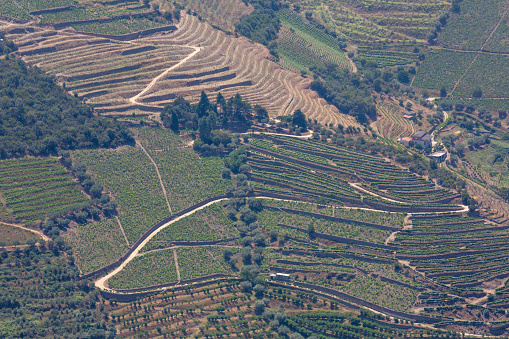 Pretty「Vines growing in the Douro valley」:スマホ壁紙(14)