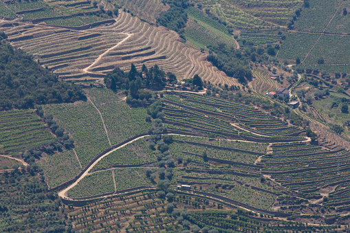 Pretty「Vines growing in the Douro valley」:スマホ壁紙(12)
