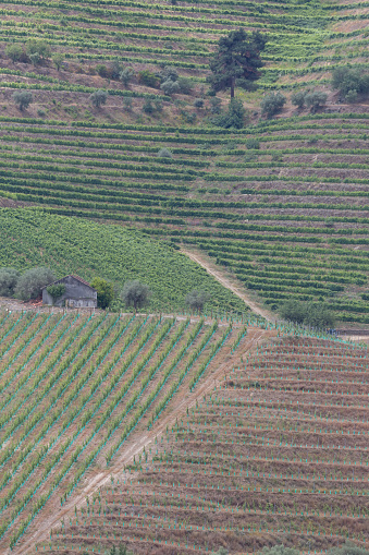 Pretty「Vines growing in the Douro valley」:スマホ壁紙(7)