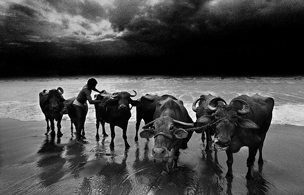 Horizon「Life On The  Southern Indian Beach Of Marina」:写真・画像(19)[壁紙.com]