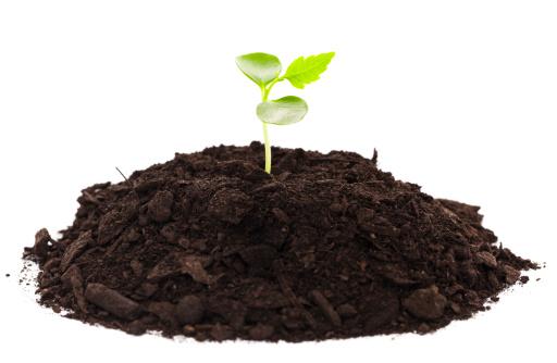 Planting「Seedling」:スマホ壁紙(12)