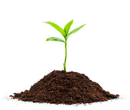 Gardening「Seedling」:スマホ壁紙(7)
