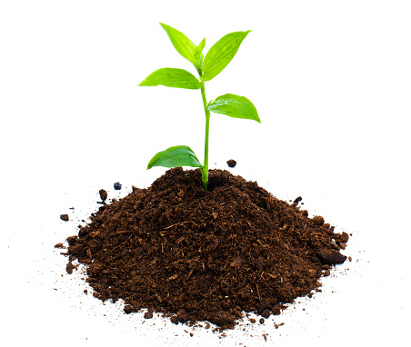 Planting「Seedling」:スマホ壁紙(6)