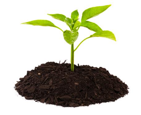 Planting「Seedling」:スマホ壁紙(10)
