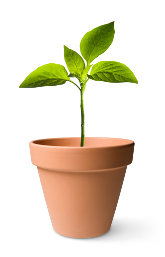 Plant「Seedling」:スマホ壁紙(15)