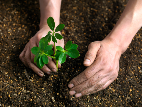 Planting「Plant sprout」:スマホ壁紙(19)