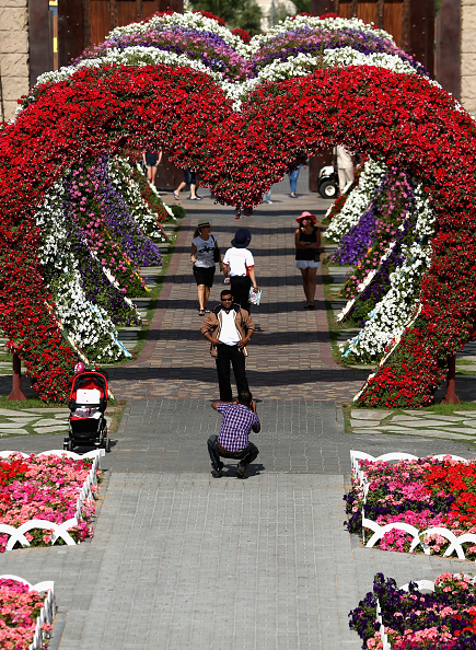都市景観「General Views of Miracle Gardens in Dubai」:写真・画像(14)[壁紙.com]
