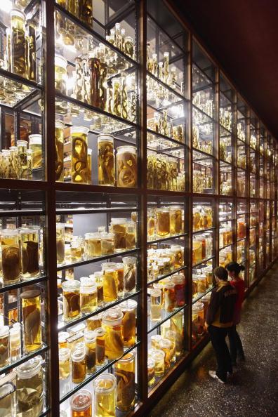 Crustacean「Natural History Museum Celebrates 200th Anniversary」:写真・画像(16)[壁紙.com]