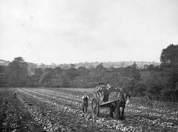 Working Animal「Mangold Harvest」:写真・画像(17)[壁紙.com]