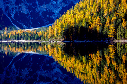 Larch Tree「Mountain rocks and autumn forest reflected in water of Braies Lake, Dolomite Alps, Italy」:スマホ壁紙(18)
