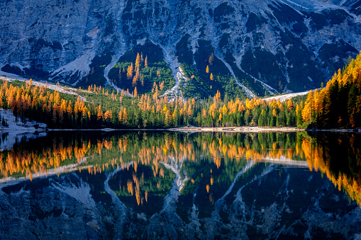 Larch Tree「Mountain rocks and autumn forest reflected in water of Braies Lake, Dolomite Alps, Italy」:スマホ壁紙(4)