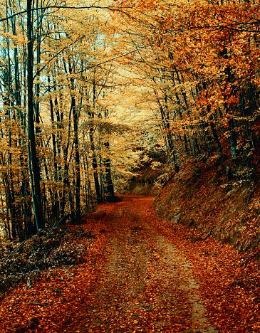風景(季節別)「Mountain road in the autumn」:スマホ壁紙(12)