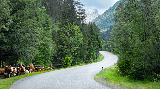 Lenggries「Mountain road in springtime」:スマホ壁紙(7)