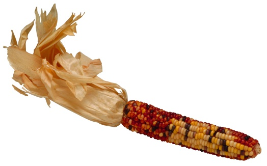 Indian Corn「Autumn corn」:スマホ壁紙(5)