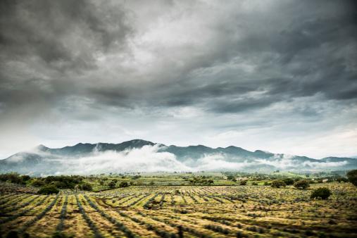 Sayulita「Rural crop fields under cloudy sky」:スマホ壁紙(2)