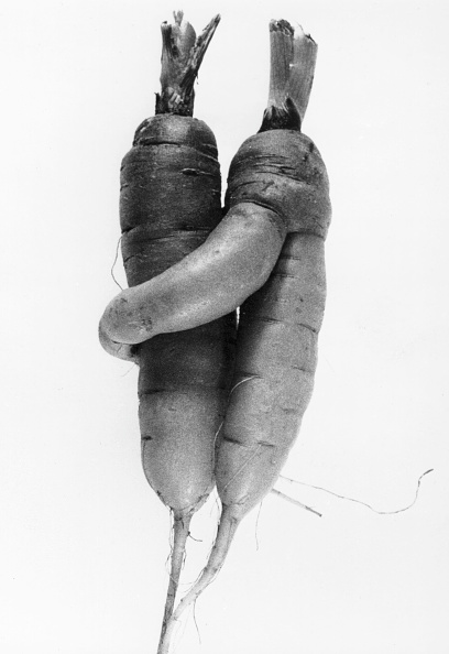 Attached「Cuddling Carrots」:写真・画像(17)[壁紙.com]
